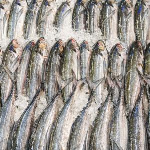 ハードルの高いスペインの魚売り場:サーモン丸ごと買い!