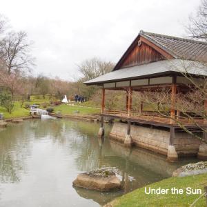 ヨーロッパ最大:ベルギーの日本庭園で心を癒す!