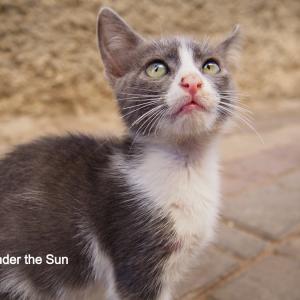 世界ネコ旅①:モロッコのラバトで出会った愛くるしい子ネコたち!