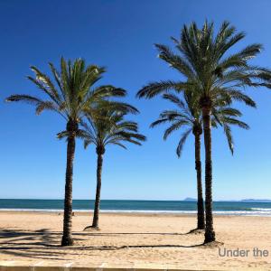 バレンシアからビーチで有名なCulleraまで45km:果樹園やビーチを通ってのサイクリング!