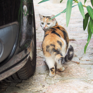 世界ネコ旅③:マヨルカ島で出会った幸せな猫たち
