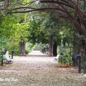世界ネコ旅④:バレンシア大学付属植物園に住むフレンドリーなネコたち