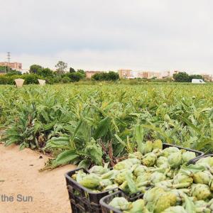 バレンシア市内で田園風景をエンジョイ!