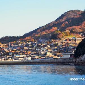 世界ネコ旅⑥:香川・男木島のネコ