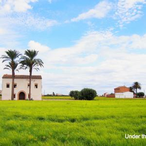 バレンシア名物のドリンク、オルチャータとその一大生産地のAlboraya
