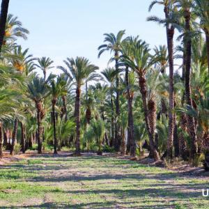 世界遺産:緑生い茂るエキゾチックなスペイン・エルチェのヤシ園へ!