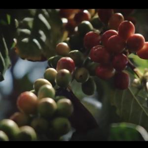 【ハワイ好きのための書き取り練習7】コナコーヒーがおいしい理由:Hawaii Connection~コナコーヒー農家~ by ハワイ州観光局
