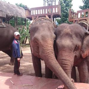 ルアンパバーン観光ツアーでゾウ使い免許が取れる⁉国家資格って本当?