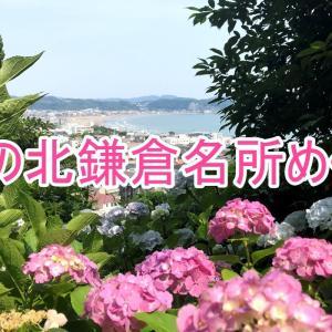 【高齢者一人旅】歴史的鎌倉観光ベストスポット3選!65歳の父でもゆっくり周れた夏の紫陽花ルート!