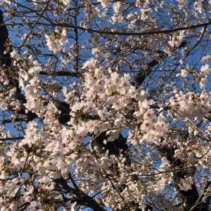 桜が散る前に、これからを考えよう❣️