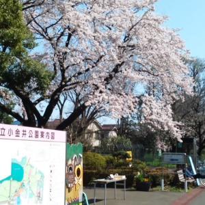 東京都・小金井公園