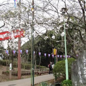 神奈川・衣笠山公園