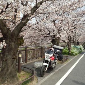 愛知県・山崎川