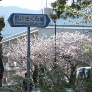 兵庫県・夙川公園