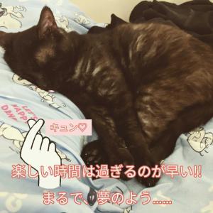 クロねこ(ΦωΦ)の…ションボリ(´・ω・`)