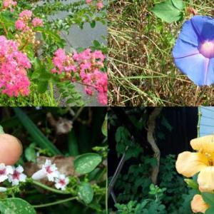 2020年8月の花、猛暑の中身近で見つけた花たちの記録(花散歩)