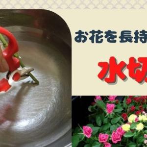 水切りしてますか?切り花を長持ちさせる水揚げの基本。飾る前のひと手間が大切です!
