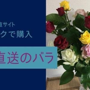 産地直送のバラ【食べチョク】で購入!品質も金額も大満足♪花屋の私もオススメします。