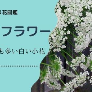 レースフラワーの切り花:よく似た花も多い白い小花。飾り方のポイント・水揚げ・日持ち管理など
