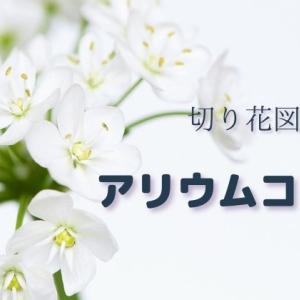 アリウムコワニーの切り花:純白で放射状に咲く小花と曲がった茎が魅力。飾り方や日持ちは?