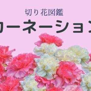 カーネーションの切り花:日持ちも良く結婚式からお葬式までどのシーンでも活躍します。