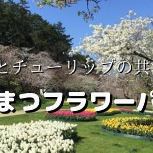 【はままつフラワーパーク】桜だけではない!春の花たちが咲く2021年3月の花散歩