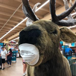 【アリゾナ】グランドキャニオンのエルクもマスク着用でお出迎え