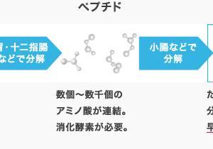 3大栄養素その②(タンパク質)