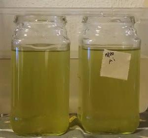 バチルス菌浄化作戦開始