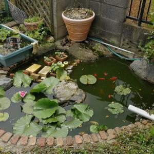 これから池を自作する人に伝えたいこと