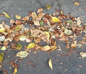 メダカの冬越しベッドにする葉を選んでみた