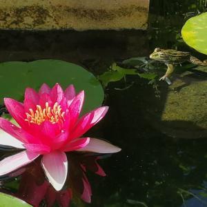 庭に住み着いたカエルと仲良くなる方法