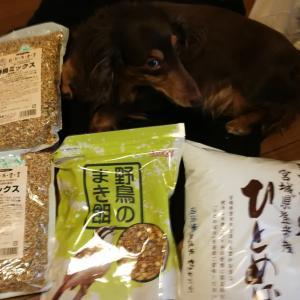 日の出知らせる雀。ジモティー青米10kg。小麦粉コーティングハンバーグ。