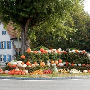 秋の風物詩!町を一層楽しくしてくれる脇役とは?