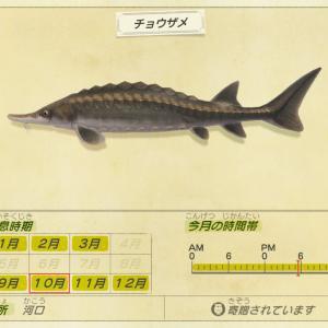 【あつ森】チョウザメを釣ろう!の巻