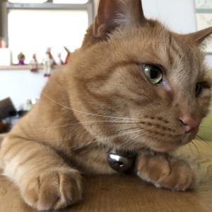 今日も暑いので猫たちのためにエアコンがフル稼働