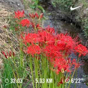 さくっと朝ラン、5km最速!!