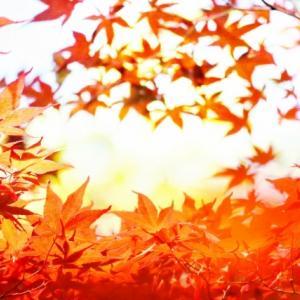 9月29日 過ごしやすい季節になってきた