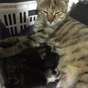 野良猫ミンノシュの出産から4日。