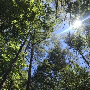 開拓3日目(木の伐採、ベンチ製作、デイキャンプなど)