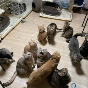 多頭飼育崩壊の猫65匹(クラウドファンディング11/10開始)