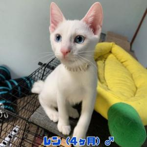 【猫丸情報】 告知   見学会 9/18~9/20