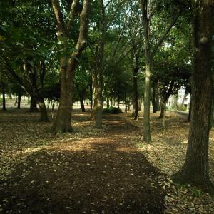 樹と土の香り