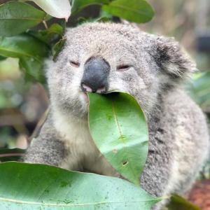 オーストラリア シドニーの検疫ホテルスタッフが感染
