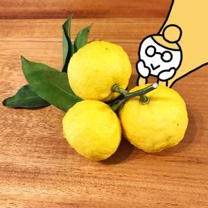 【はじめての柚子仕事①】ゆず塩を作ってみました
