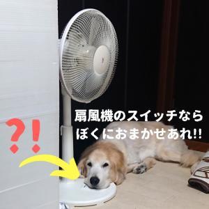 扇風機大好きわんこ🐶