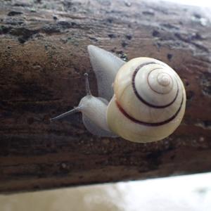 汚れないカタツムリの殻のひみつ