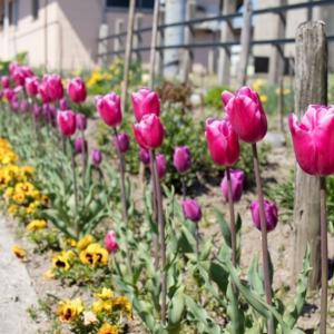 20210624 一人のあるおじいさんが育てたお花たち