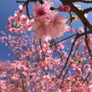 桜 開花予想