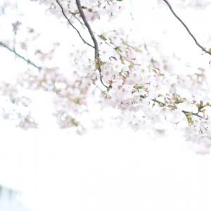 桜 - Your time is limited. So don't waste it living someone else's life.